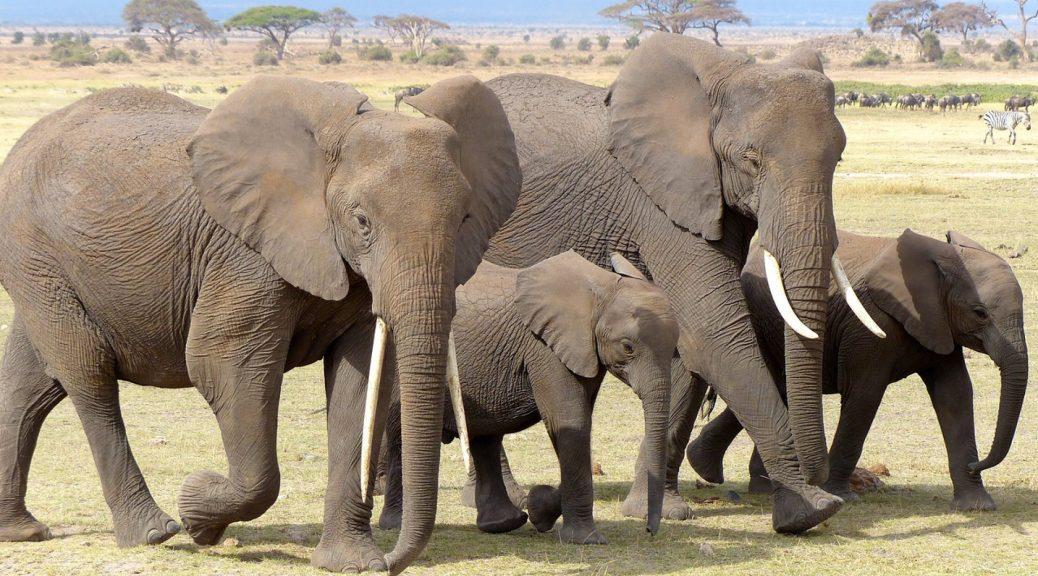 Pourquoi effectuer un voyage au Kenya ?
